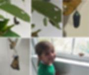 addy-butterfly.jpg