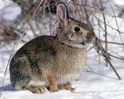 bunny image 251x201.jpg