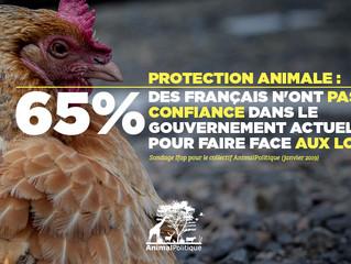 Les résultats du sondage exclusif :  Ifop-collectif AnimalPolitique 2019 !