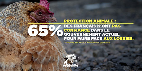 Protection_animale_-_65___des_Français_n