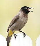 projects-learningenv-birds.jpg