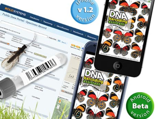 DNA Barcoding Assistant