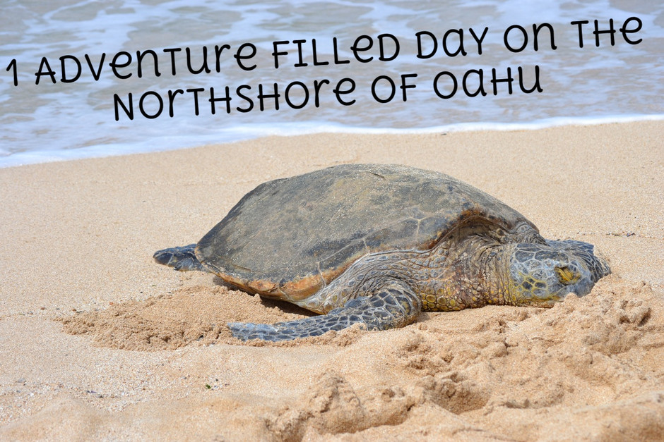 1 Adventure Filled Day for Teens on Oahu's North Shore