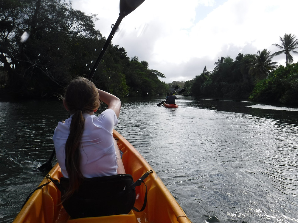 And we're off! Kayaking the Anahulu in search of sea turtles.