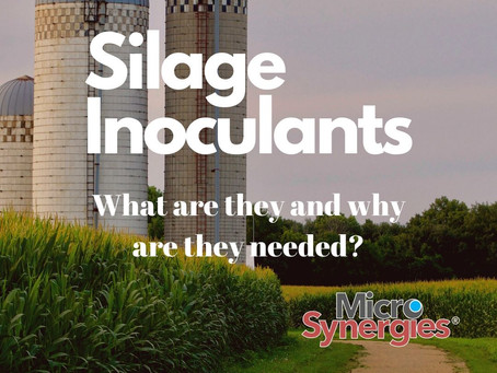 Inside the Silo - The Magic of Silage Inoculants
