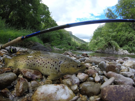 """Canne Hearty Rise 3.93m """"Trout Force"""""""