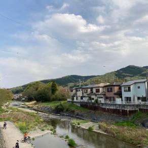 小川の町のナウワシ