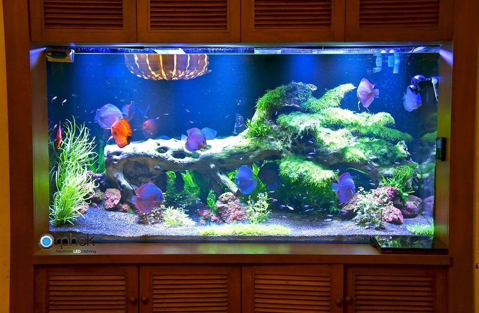 planted-freshwater-aquarium-lighting-dis