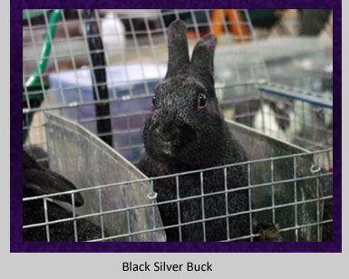 black-buck.jpg