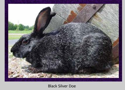 black-doe.jpg