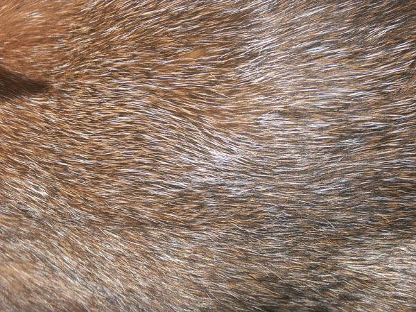 brown-silvering.jpg