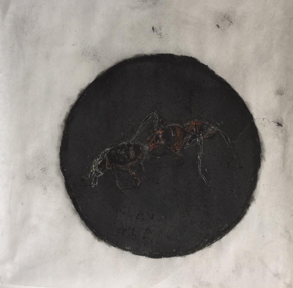 Sol preto e outras cosmografias