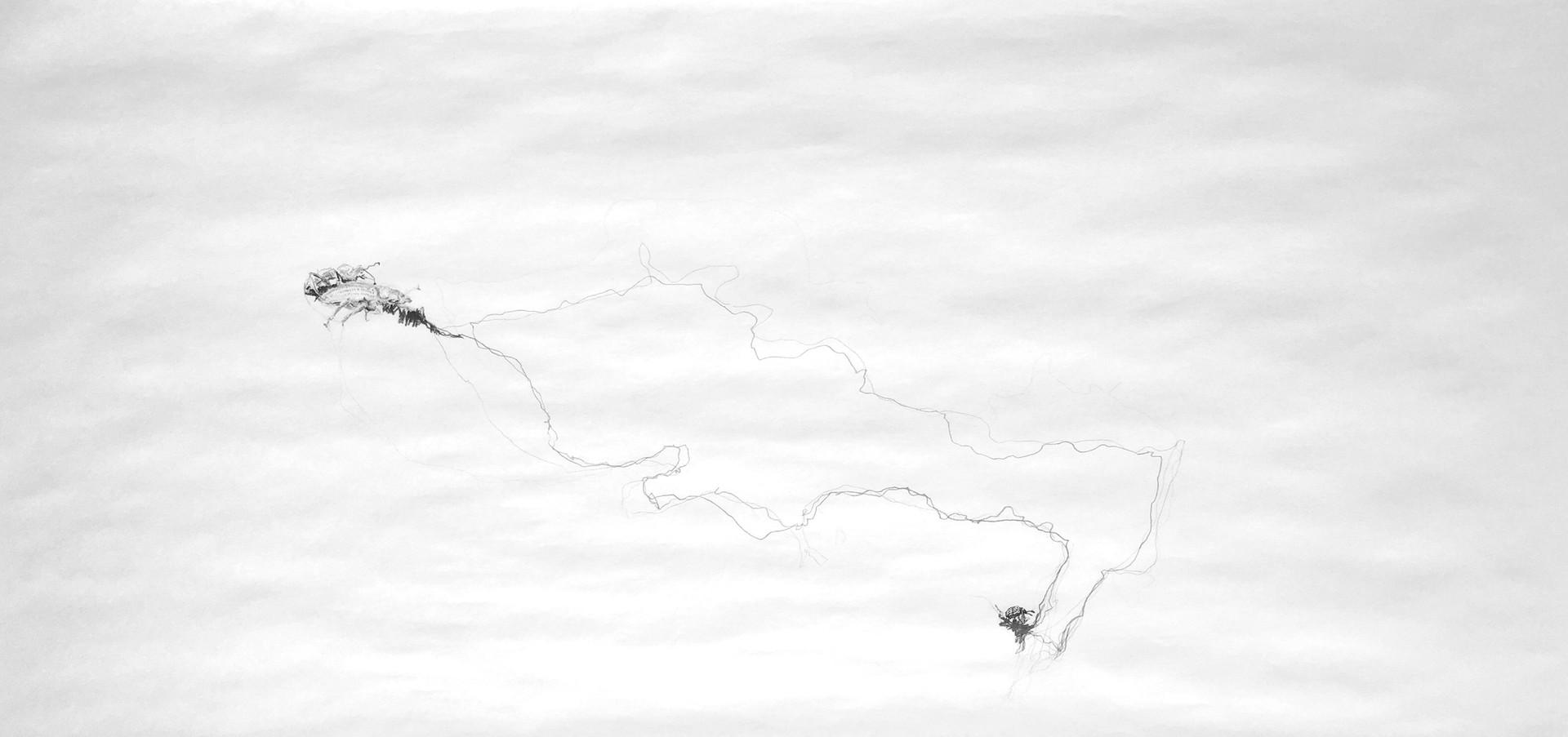 Cartografias do Invisivel