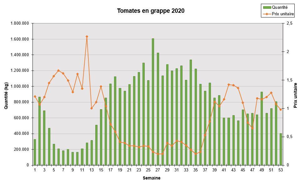 Tomates en grappe 2020