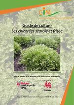 Chicorées_2020.JPG