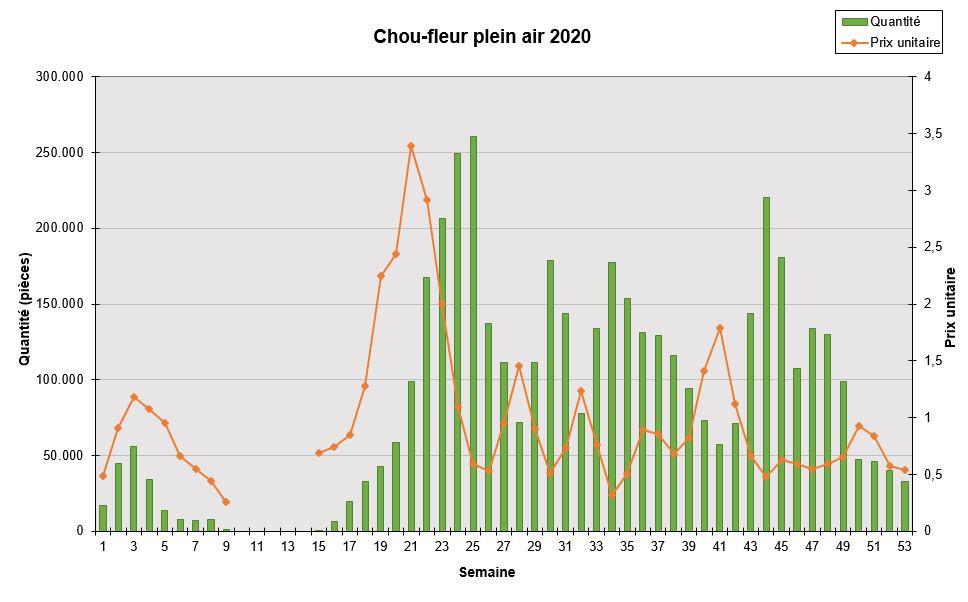 Chou-fleur plein air 2020