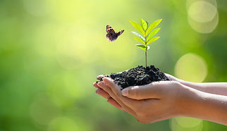 vecteezy_female-hand-holding-a-tree-on-nature-background-with-butterfly_2465674.jpg
