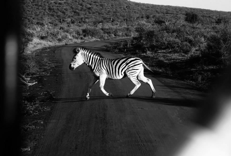 SOUTH AFRICA l MADIKWE