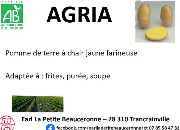Pomme de terre bio Agria 5 kg
