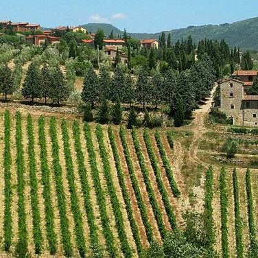 Durch die Weinregion um San Gimignano
