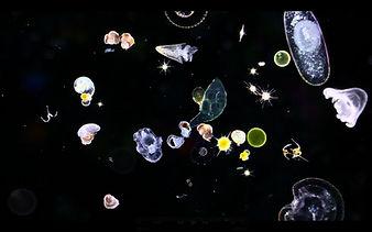 3-Des-organismes-microscopiques-du-planc