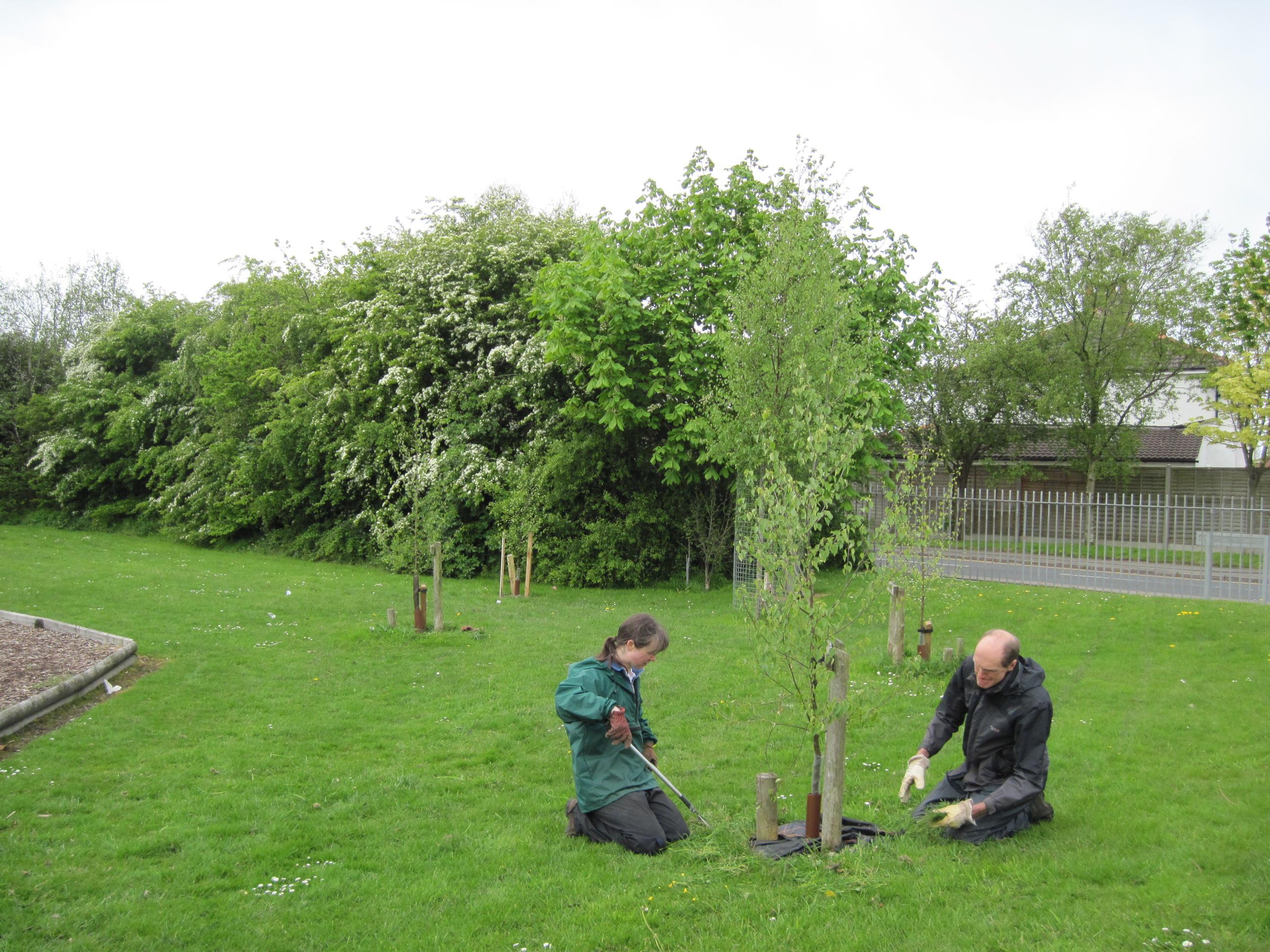 Weeding round tree