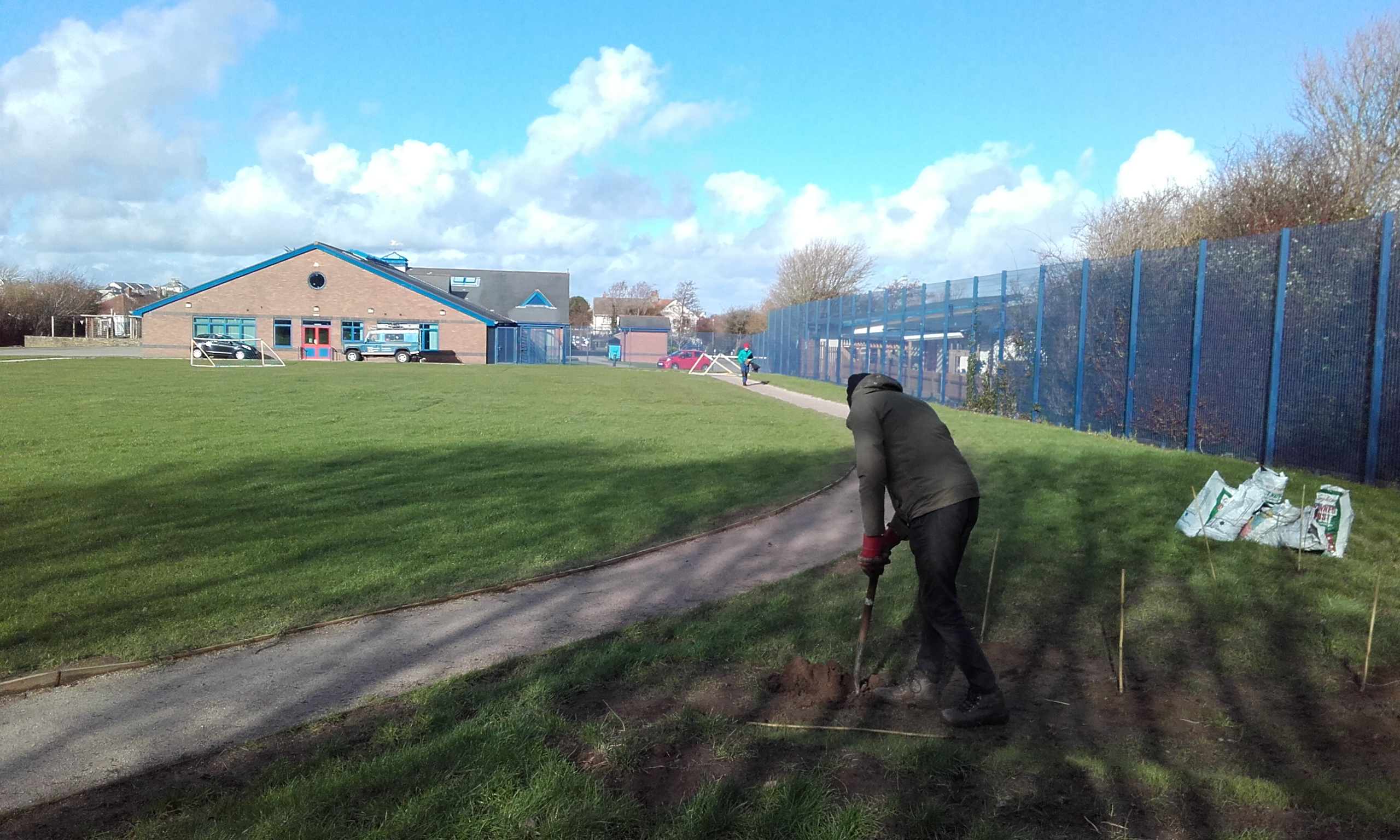 Tree planting in corner of school field