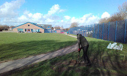 Tree planting in corner of school field