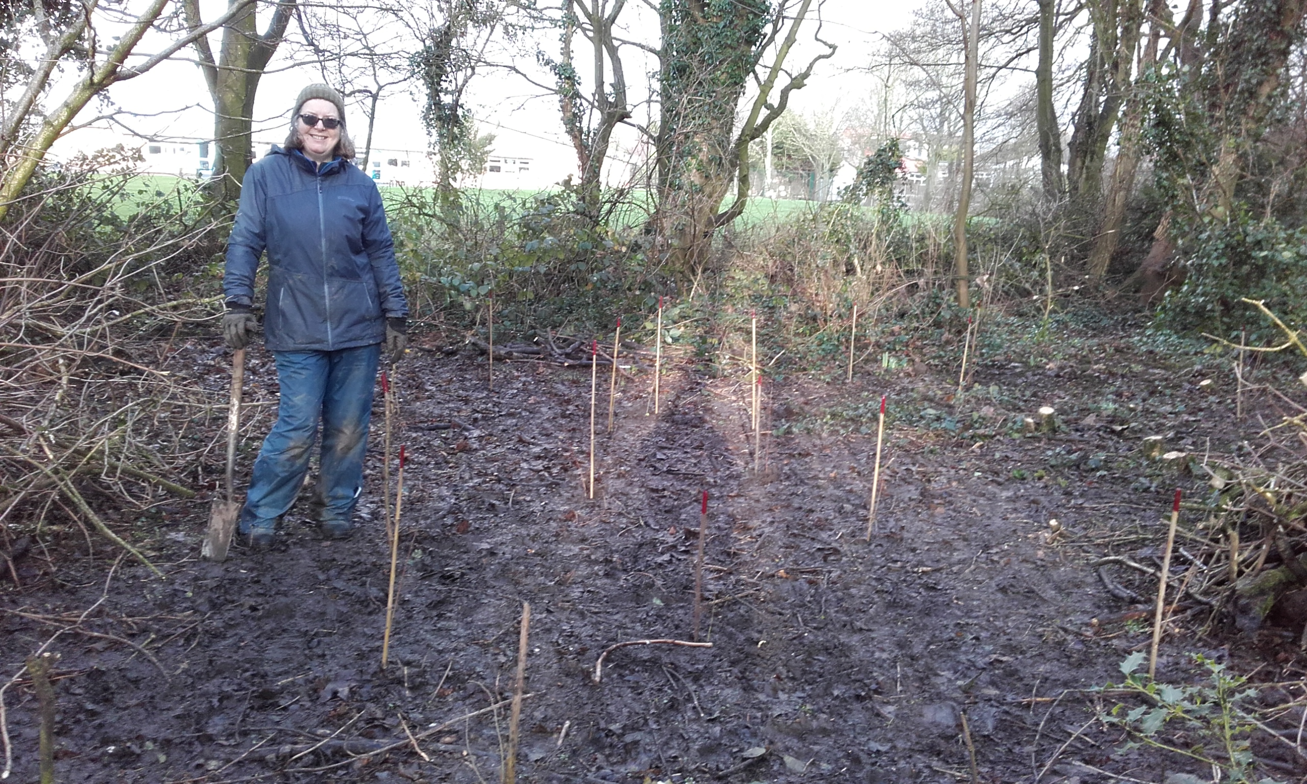 stakes to mark new plants