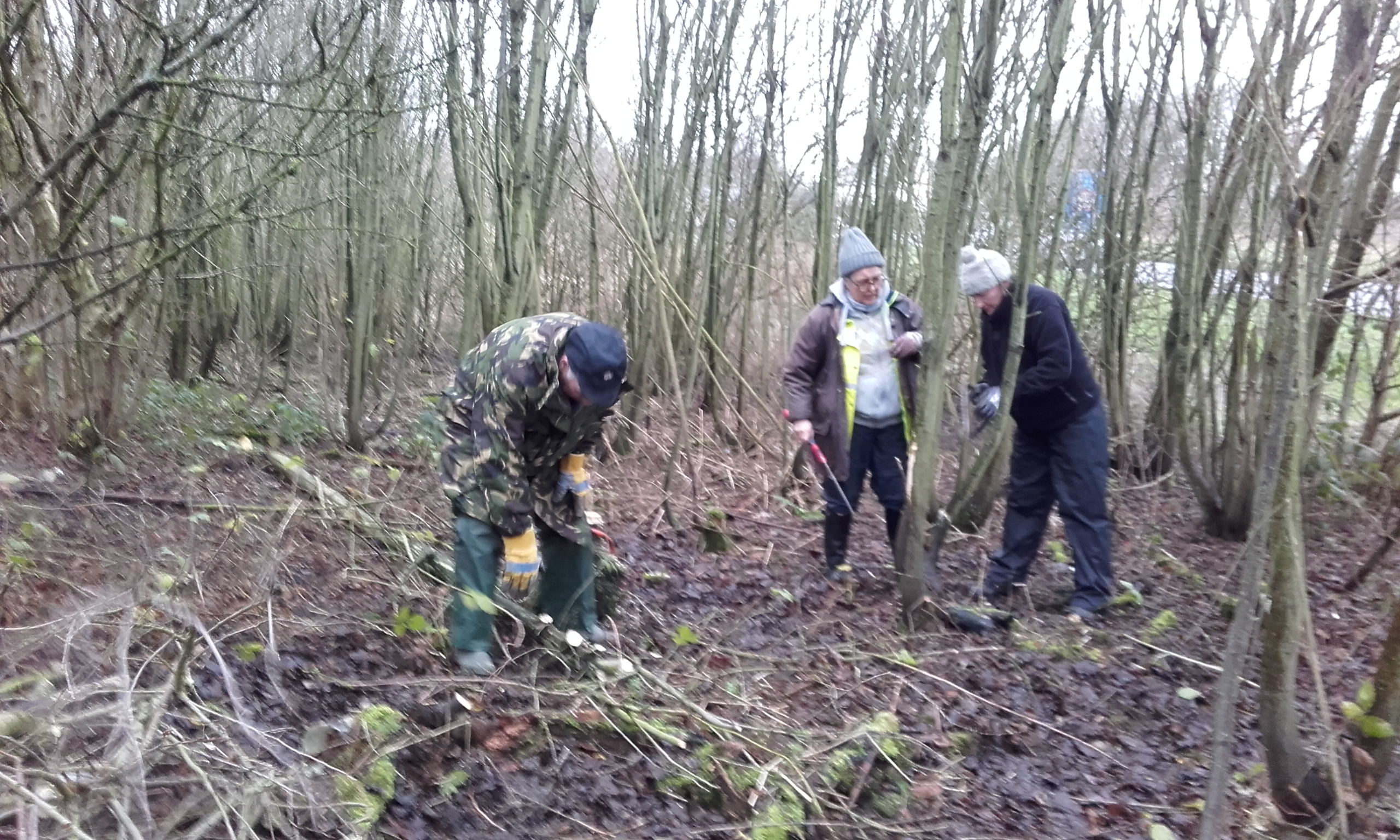 Coppicing central area