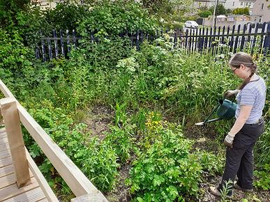 Watering bog garden