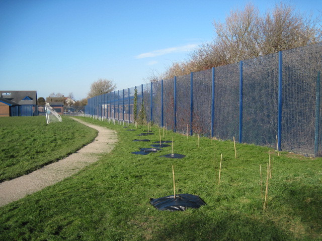 Weed mats for young trees
