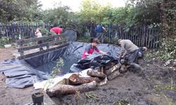Separating pond from bog garden