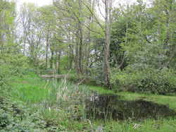 Great Wood Pond