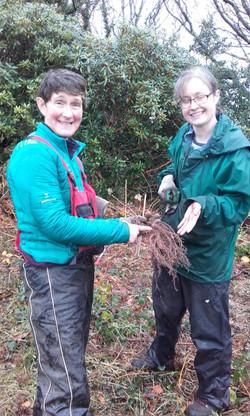Roots aplenty!