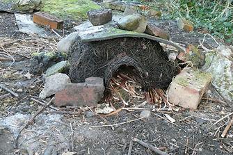 Hedgehog home