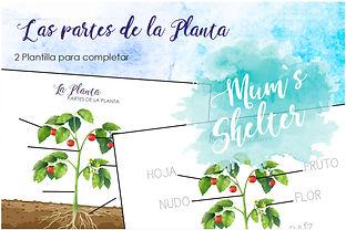 La Planta - Partes - Plantilla etsy.jpg