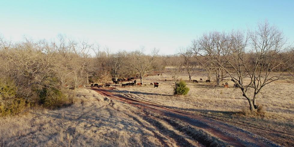 Cattle Land Survey
