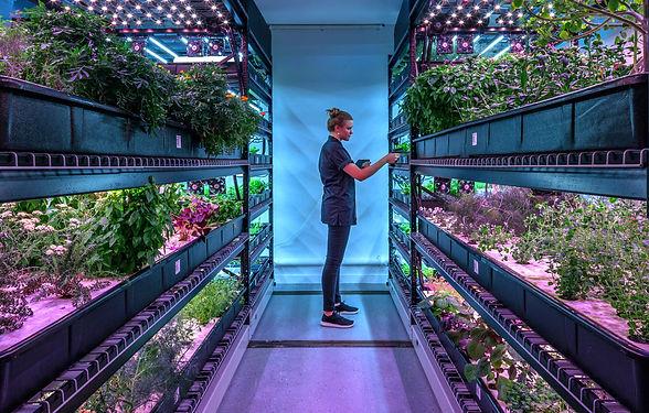 """Farm One"" microgreens and edible flowers."