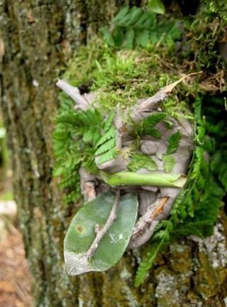 Bosgeesten - Tijdelijke ingrepen in de natuur