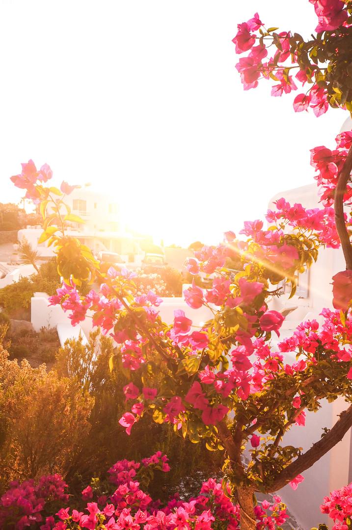 Mykonos, Greece #20