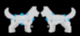 ProSixK9_Fitting Diagram_v3_00.png