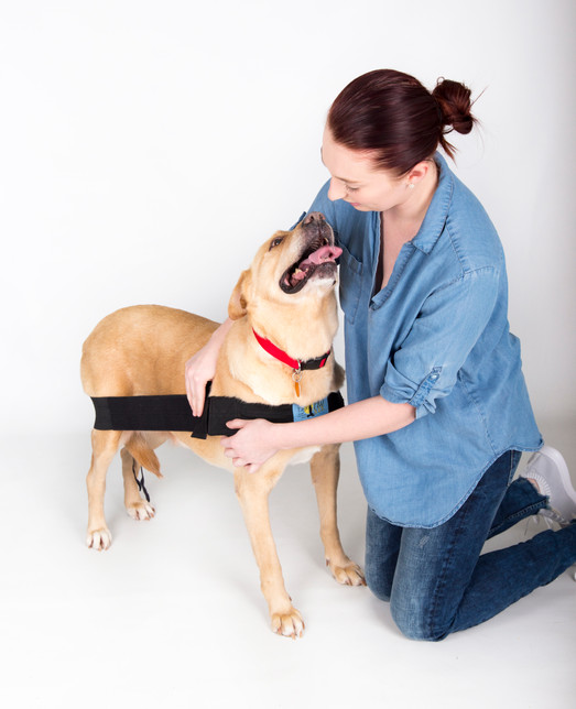 The shoulder strap should be snug enough to hold the long body strap in a straight line and keep the chest strap in place. (Sometimes, after the dog has done activity, you will notice that further adjustments must be made to placement).