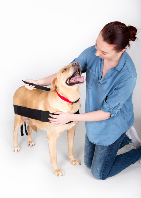 Attach the shoulder strap that you had set aside. (Usually the longer of the two) The shoulder strap attaches on both sides of the dog. Start on one side and lay over the base of the neck and attach to the opposite side.