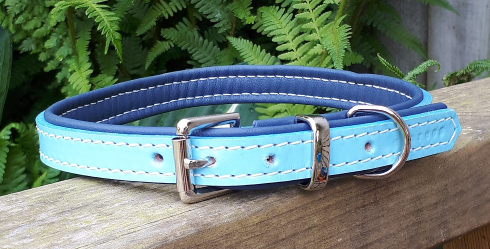 Padded Leather Buckle Collar: Baby Blue on Navy