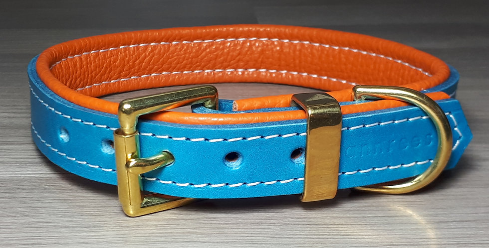 Padded Buckle Collar: Turquoise on Orange 15/16 inch neck