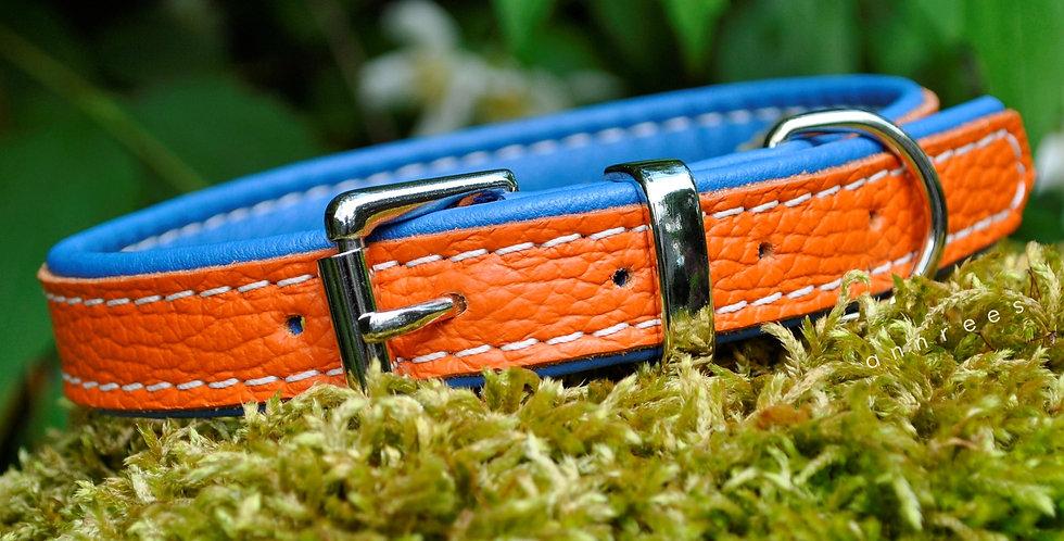 Double Softee Padded Collar: Orange on Cobalt