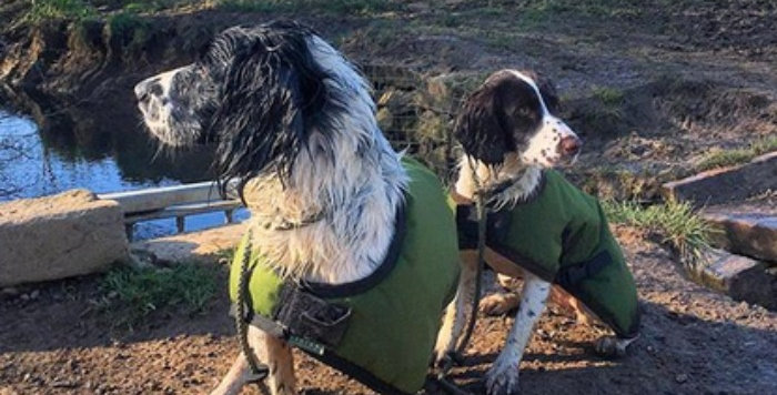 Working Dog Coats