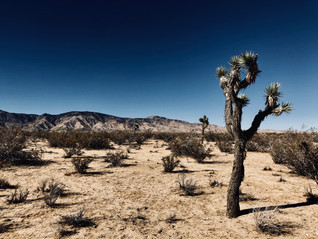 Mojave Desert Hike