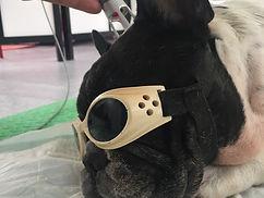 Laser terapeutico fisioterapia perros hernia discal